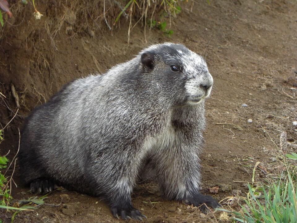 El alimento que se repite como el día de la marmota