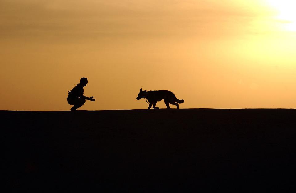 El hombre que habla con los perros
